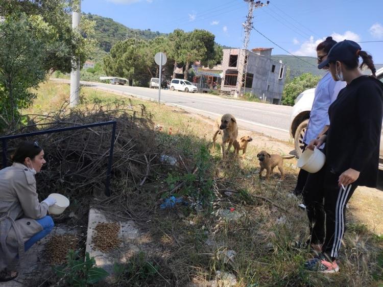 Armutlu Belediyesi Sokak Hayvanlarını Unutmuyor