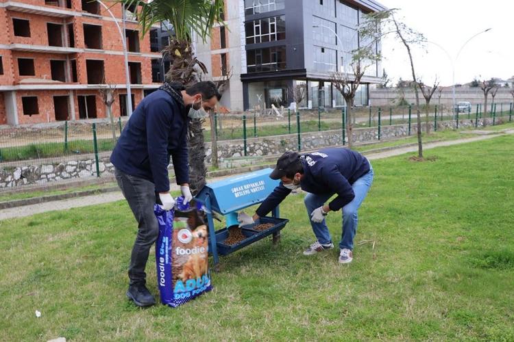 Çiftlikköy'de Hayvan Dostlarımıza Mama Desteği