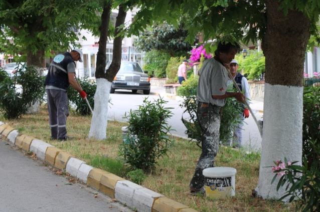 Çınarcık'ta Ağaçlara Kireçleme Yapıldı