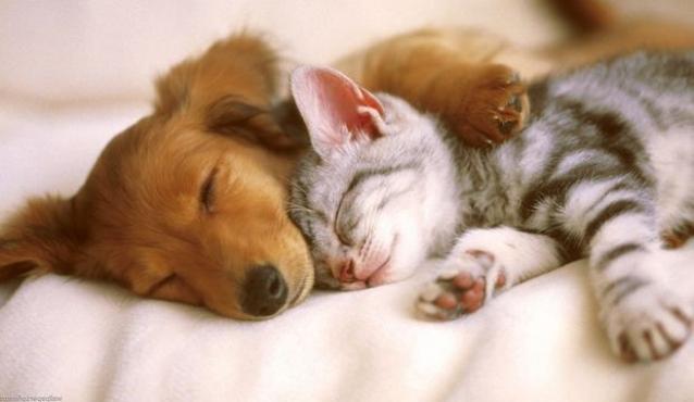 Kedi Ve Köpeklere Derialtı Mikroçip Uygulanacak
