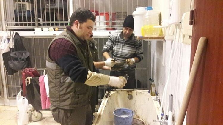 Petrole Bulanmış Su Kuşları, Yaşama Döndürüldü