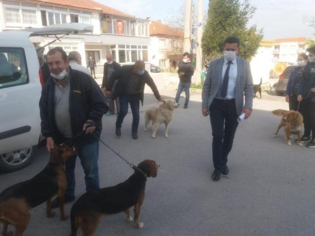 Sokak Köpeklerine Kuduz Ve Uyuz Aşısı Yapıldı