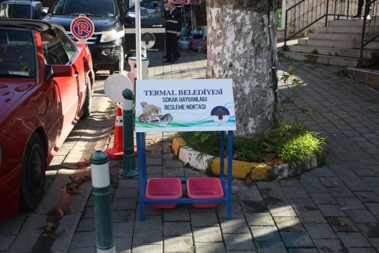 Termal'de Sokak Hayvanlarına Beslenme Noktası