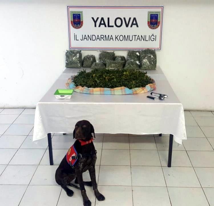 Yalova'da Skunk Adlı Yeni Nesil Uyuşturucu Ele Geçirildi