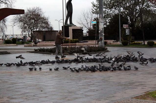 Yalovalı Taksiciler Kuşlara Sahip Çıktı