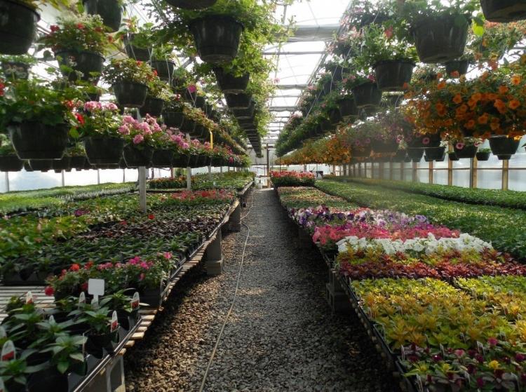 Yalova'ya Çiçekçilik OSB Geliyor